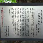 大久保の大ケヤキPHOTO